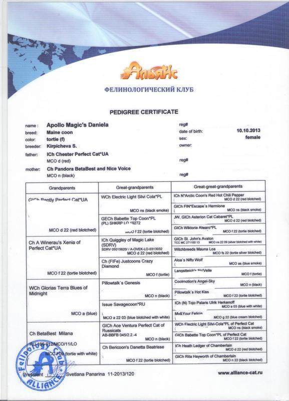 мейнкун сертификат