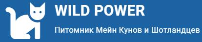 WILD POWER — питомник Шотландских кошек и Мейн Кунов В СПБ